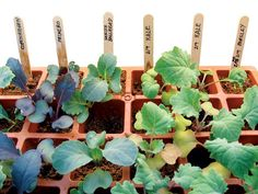 Seed Starting Made Simple - Organic Gardening - MOTHER EARTH NEWS