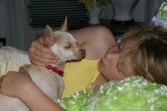 Holly, Chihuahua/Italian Greyhound ... JhC #Pets #Dogs