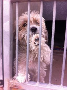 NAME: NO NAME ID: A1243005 INTAKE: 4/9/13 Sex: M Weight: ~15# Age: 4 years Breed: TERRIER X KENNEL NO: 227 INTAKE STATUS: STRAY      OC Animal Shelter 561 The Please repost so I can find my forever home!  City Drive South Orange, CA 92868  *714-935-6848* Sunday through Saturday - 10:00 AM to 5:00 PM