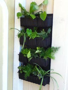 Jardín vertical #Starbucks #DIY #Inspiracion #Inspiration