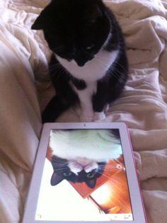 profile pics, mirror, funny animals, selfie, cats, cat selfi, funny animal pics, funni, kitty