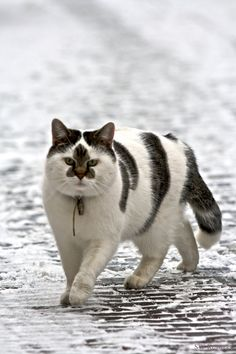 What awesome markings on this cat!