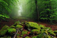 Ayguebonne Forest, France