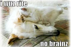 LolCat Pictures | Funny Cat Pics » Blog Archive Cool, Funny Cat Pictures