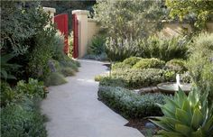 This totally no-mow landscape  has a Mediterranean flair and a modern touch in the red doors. Design by Alida Aldrich Landscape Design in Santa Barbara, CA. See more lawn-free pics here: http://www.landscapingnetwork.com/landscaping-ideas/lawnless.html