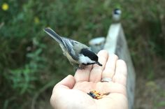 Tips and tricks for getting birds to eat out of your hand! birdsandblooms.com