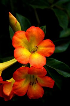 Big Island Flowers