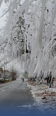 Ice storm... so pretty, and so damaging.