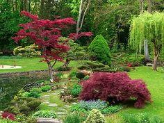Japanese Maple Magic in the garden.