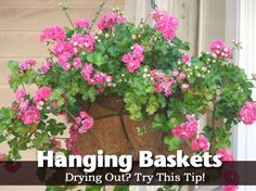hanging-baskets -tips to keep from drying out.