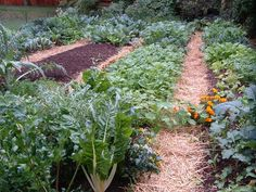 Oh to have a vegie patch!