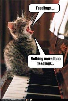 Cat Food Humor: Feelings...I mean feedings :)