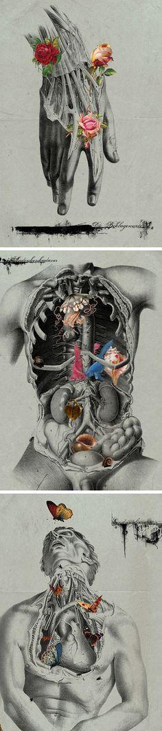 michell parliment, digit collag, art paintings, anatomi, the ocean, collages, artist, illustr, michel parliament