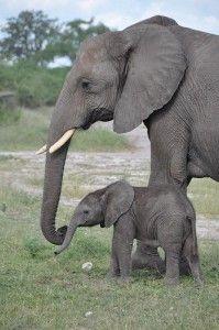 E is for elephant preschool lesson plan
