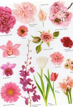 Images of pink flowers with names babangrichie flower names by color beautiful flowers mightylinksfo