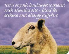 renewable materials wool