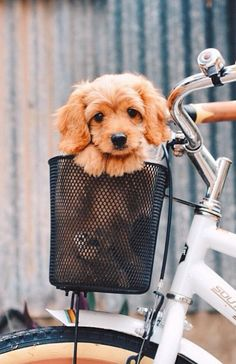 going on a bike ride