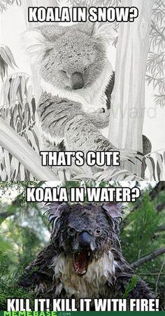 wet koala, oh no!