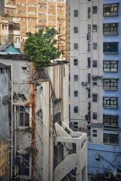 Wild Trees Grow Up The Side Of High-Rises In Hong Kong - Neatorama