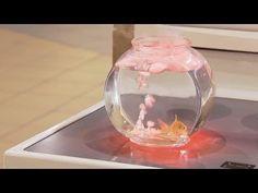 Fish Boiling In Aquarium Prank