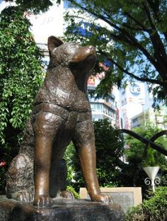 Bronze statue of Hachiko in Shibuya Station, Japan - Visit http://asiaexpatguides.com and make the most of your experience in Japan!