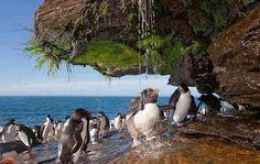 Penquins washing off salt.