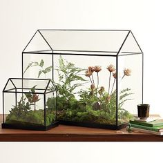 Glass Greenhouses: Made of glass with a removable top and powder coated copper frame and base. $49 - $169 #Home_Decor #Greenhouse