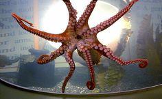 Octopus Garden at Mall of America aquarium