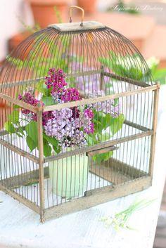 birdhous, cottag, birdcag beauti, bird cage, crocheted flowers