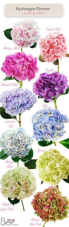 hydrangea colors...my favorite flower besides Eastern Lilacs