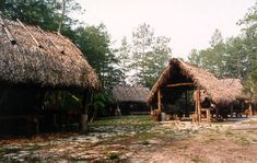 Indian camp, sleep chickee, cooking chickee, and eating chickee. The Seminole Tribe of Florida.