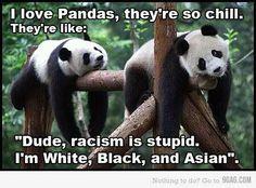 Pandas are so chill