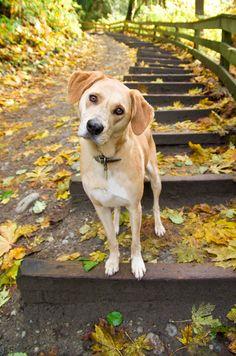 Yellow Mutt Pet Photography