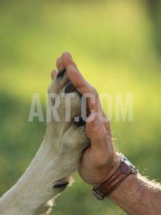 pet photo idea