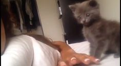 In Just 3 Seconds, This Kitten Will Make You Laugh Out Loud! HYSTERICAL!