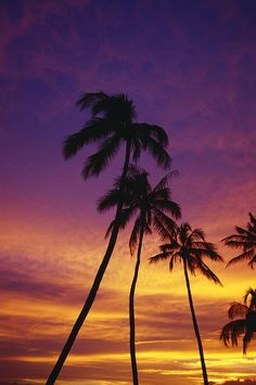 ✯ Palm Tree Silhouettes at Sunset - Waikiki