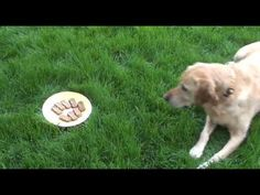 Algebra Video Lesson - Almost A Third Grader…dogs and math…can't be beat!
