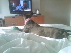 Relaxing at the Westin Hotel watching TV.