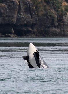 Washington State, Whale Watching