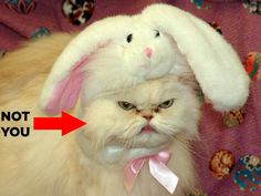 Happy Tuesday, may all your bunny hats be self-inflicted.