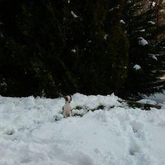 Mi primera Navidad  y casi me pierdo en la nieve.