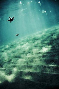 Falling Sea Stars