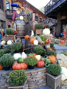 Fall in Moonshine Holler. Gatlinburg