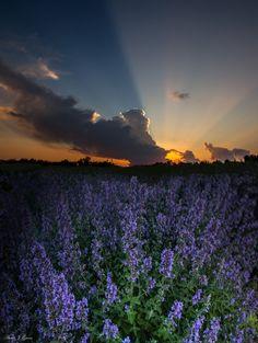 June 19th 2013 sunset from Sioux Falls, South Dakota.