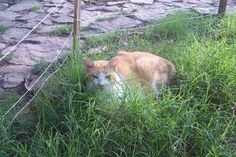 """I worked so hard to grow Tim his own lush patch of grass. He loved lying in tall grass. So I """"fenced"""" it and didn't trim or touch it. I am going to miss him in his 'estate' grass this summer."""