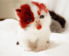 Red kitty? Amazing!