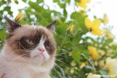 Ahaha; I love you, Grumpy Cat