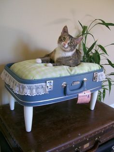 Vintage suitcases, upcycled into pet beds.  AWESOME idea!