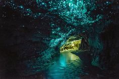 The Waitomo Caves in New Zealand are lit up by...glow worms! A fantastic experience, don't miss it if you're in the South Pacific. Visit maupintour.com for more travel inspiration! Discovered by MaupinTour at Waitomo, New Zealand