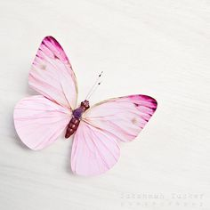 Pink and White - 8x8 whimsical butterfly photo, nursery art, girls room decor, pastel pink, butterfly decor, dreamy on Etsy, £18.39